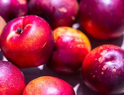 Nectarines blanches - 1 kg environ - 6/7 fruits